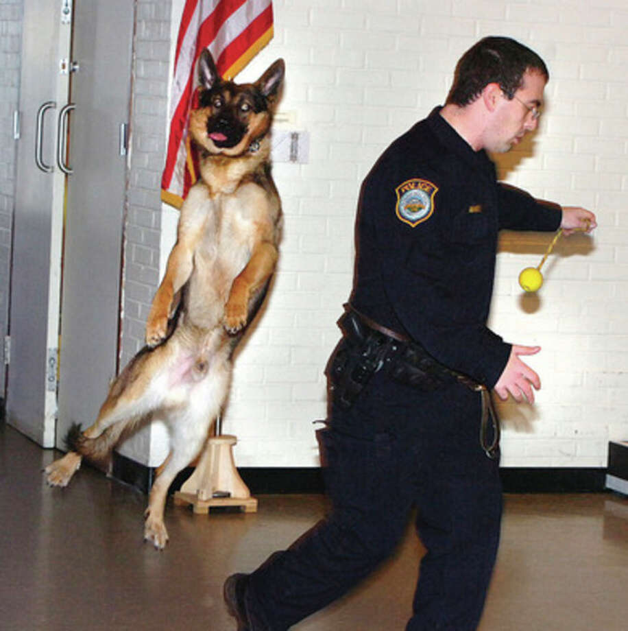 Hour Photo Alex von Kleydorff; Enzo jumps for his reward of a play ball after he sniffed out some 'contraband' during a demonstration of his skills with partner Wilton Police Officer Steven Rangel at Wednesdays Kiwanis meeting at WEPCO. / 2013 The Hour Newspapers