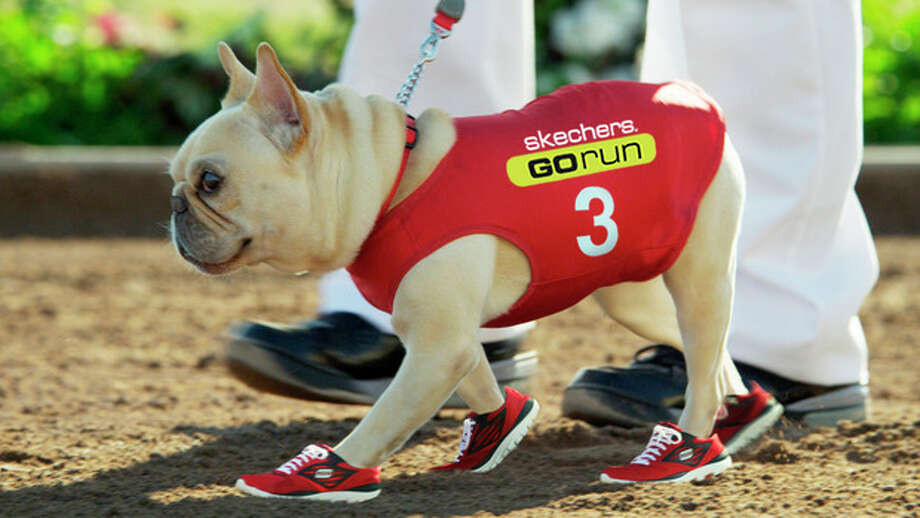 This advertisement provided by Skechers USA, shows Mr. Quiggly wearing Skechers sneakers in an ad to be aired at Super Bowl XLVI, Sunday, Feb. 5, 2012. (AP Photo/Skechers USA) / Sketchers
