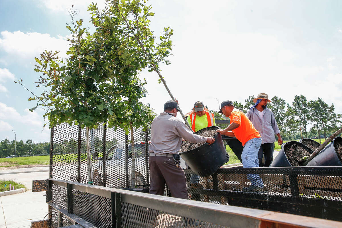 Crews unload oak trees to be planted at the 32-acre park under construction next to Cinco Ranch High School. The park is managed by the Willow Fork Drainage District.