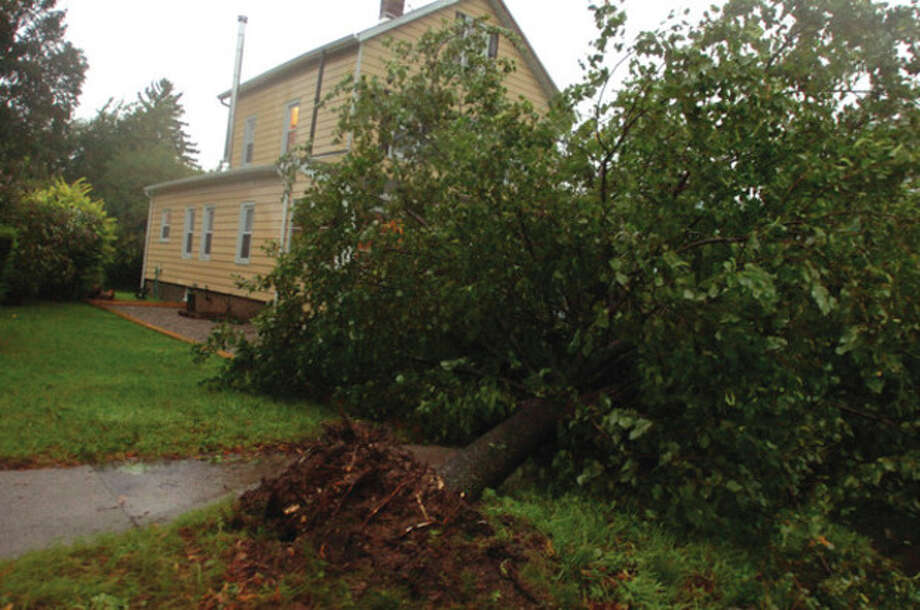 Hurricane Irene brings down a tree on Frist Street. Trees were down Sunday morning all around the Norwalk area. hour photo/matthew vinci / (C)2011, The Hour Newspapers, all rights reserved