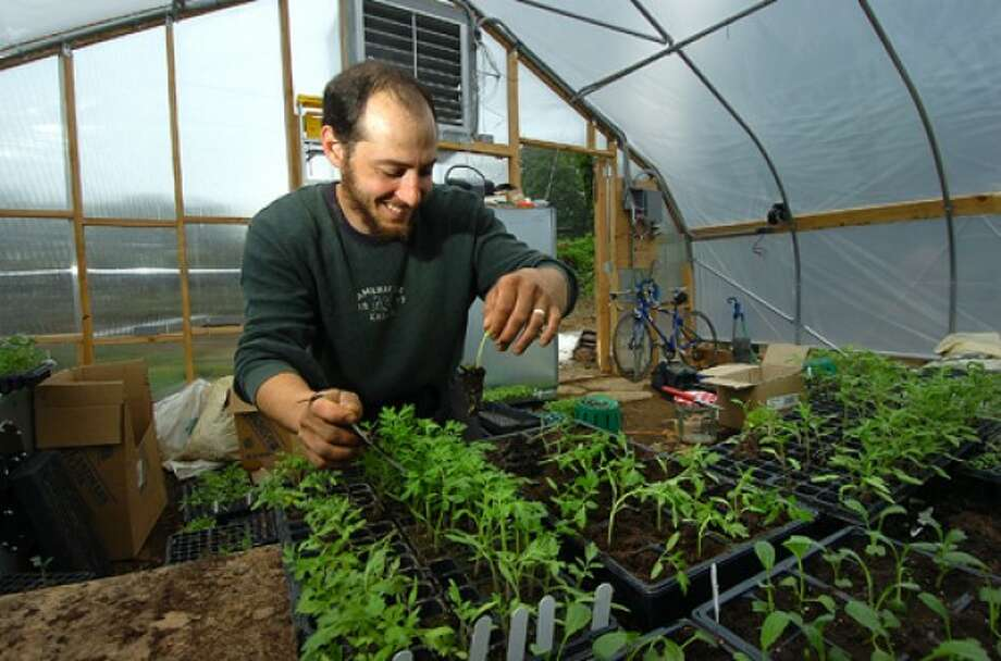Photo/Alex von Kleydorff. Ambler Farm Manager Ben Saunders takes care in up-potting one of the 20 varietys of tomatoes in the greenhouse at Ambler Farm.