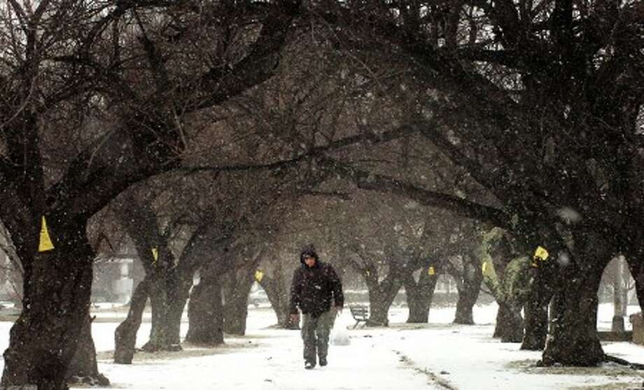 Photo/Alex von Kleydorff. In this 2009 photo, snow falls on a person walking trough the Cherry trees in Mill River Park.