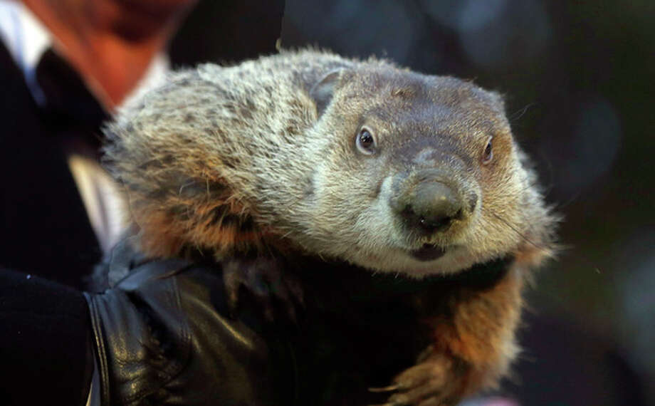 Groundhog Club Co-handler Ron Ploucha holds the weather predicting groundhog, Punxsutawney Phil, after the club said Phil did not see his shadow and there will be an early spring during the Groundhog Day ceremony, Saturday, Feb. 2, 2013 in Punxsutawney, Pa. (AP Photo/Keith Srakocic) / AP