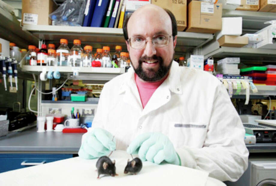 Connecticut Mirror Greg Cox, who is studying muscular dystrophy and other neuromuscular diseases, with lab mice.