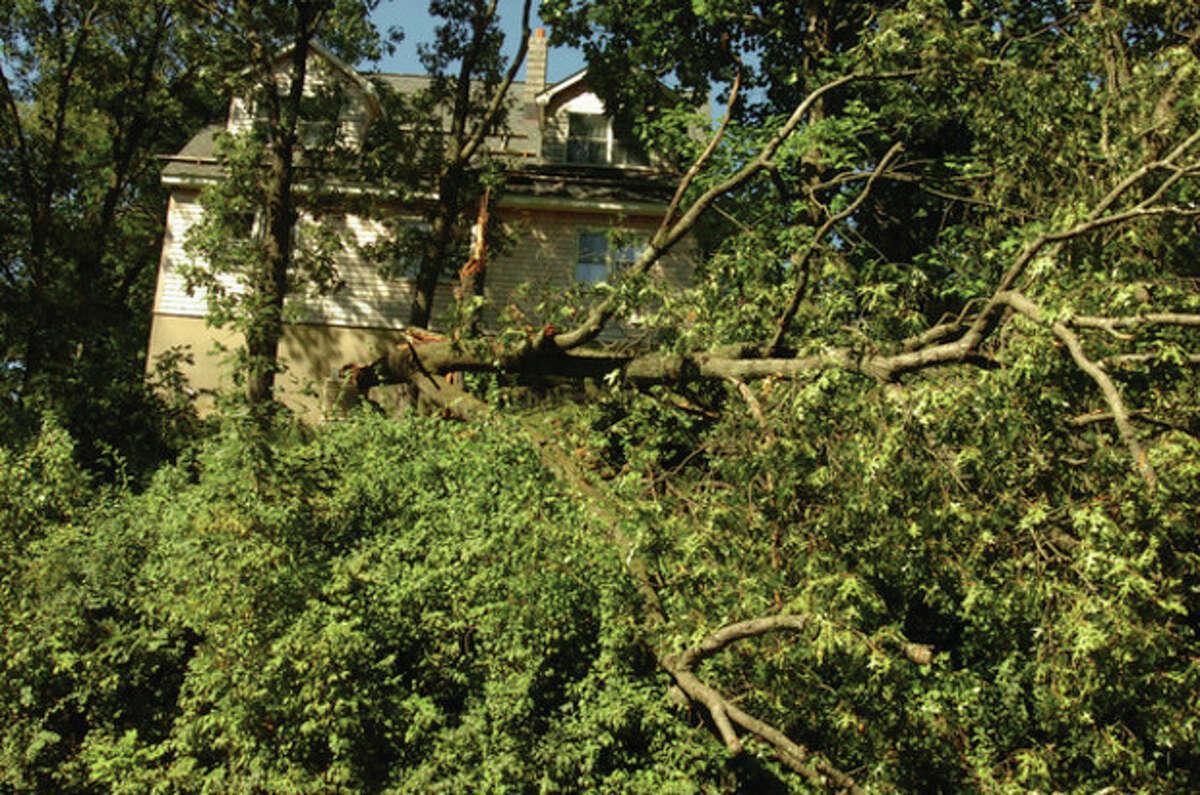 A tree hangs over the sidewalk on West Rocks road in Norwalk Monday morning following Hurricane Irene. hour photo/matthew vinci