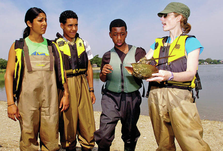 Hour photo / Erik Trautmann Soundwaters educator Tanya Shankar, Randy Polonia, 14, Tyree Smith, 13, and Soundwaters educator Jocelyn Mahone, prepare to tag a Horseshoe crab as students from Dolan Middle School take part in a SoundWaters program dealing with the migratory patterns of the Horseshoe crab recently. / (C)2011, The Hour Newspapers, all rights reserved