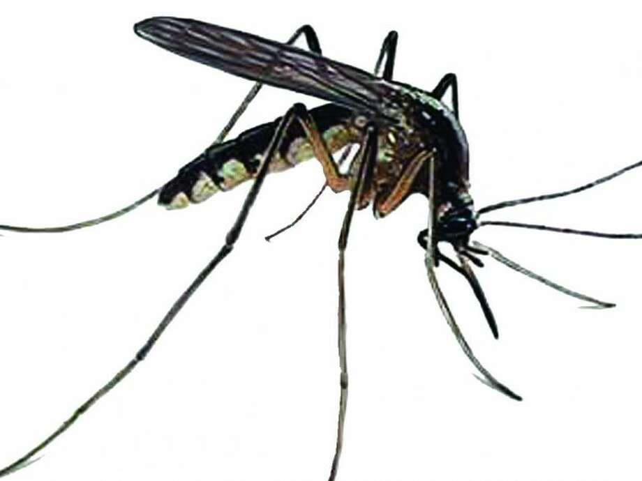 Mosquitos test positive for West Nile virus