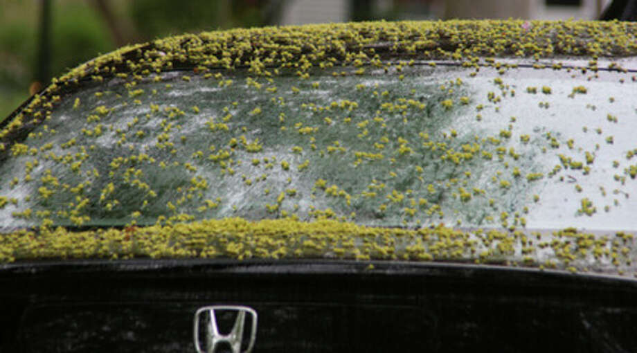 Hour photo / Chris BosakPollen covers a car in Stamford on Sunday morning. This has been a particularly tough pollen season for allergy sufferers.