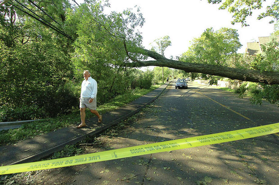 Hour Photo/ Alex von Kleydorff A resident walks around a downed tree on Roton Avenue and McKinley Street in Rowayton.