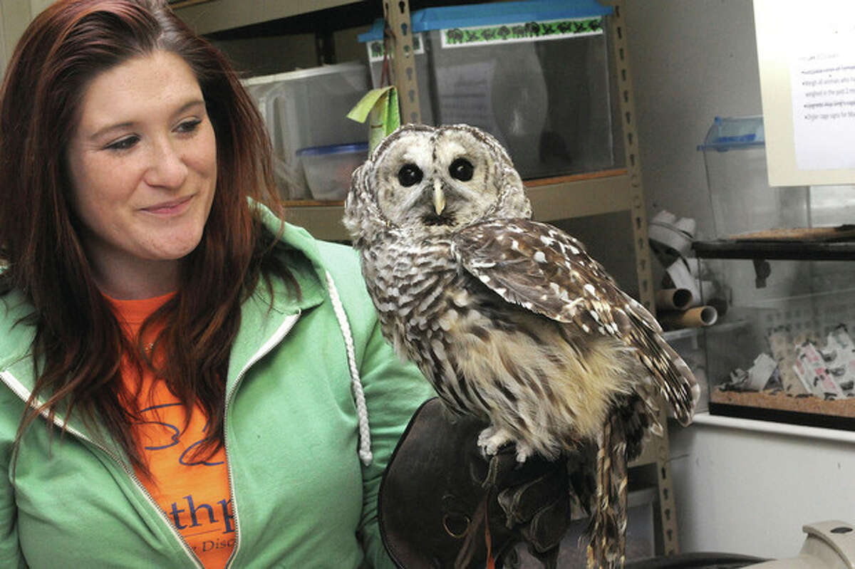 Hour photo / Matthew Vinci Erika Labrie, animal care technician with Marble the new barred owl at Earthplace in Westport.