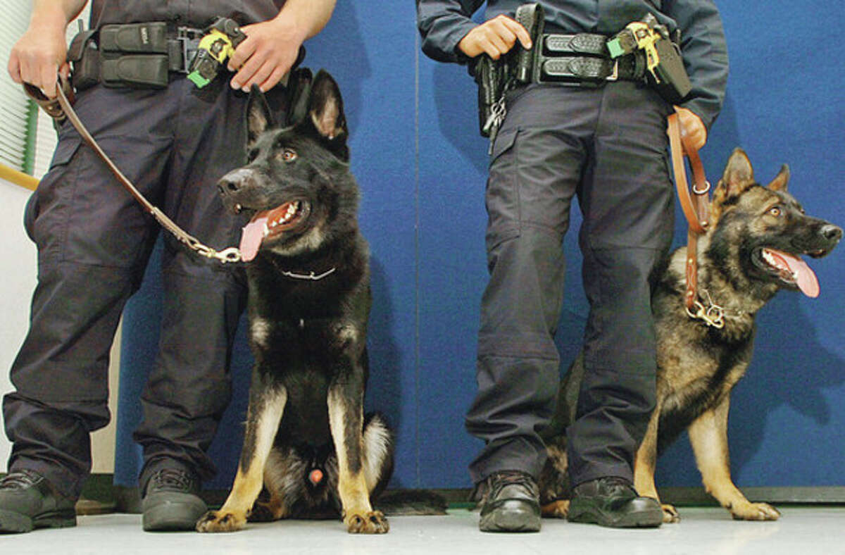 Hour photo / Erik Trautmann From left, officer Garrett Gruber with his new police dog, Kimbo, and officer Richard Montanez and his dog, Kai.