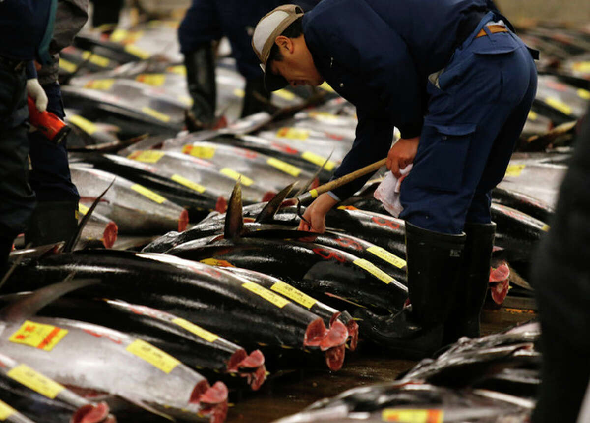 """In this Jan. 5, 2013 photo, a prospective buyer inspects the quality of tuna before the first auction of the year at the Tsukiji Market in Tokyo. Catching bluefin tuna, called ?""""hon-maguro?"""" here, is a lucrative business. A single full-grown specimen can sell for 2 million yen, or $20,000, at Tokyo?'s sprawling Tsukiji fish market. Japanese fishermen are vying with Korean, Taiwanese and Mexican fisherman for a piece of a $900 million wholesale market. (AP Photo/Shuji Kajiyama)"""
