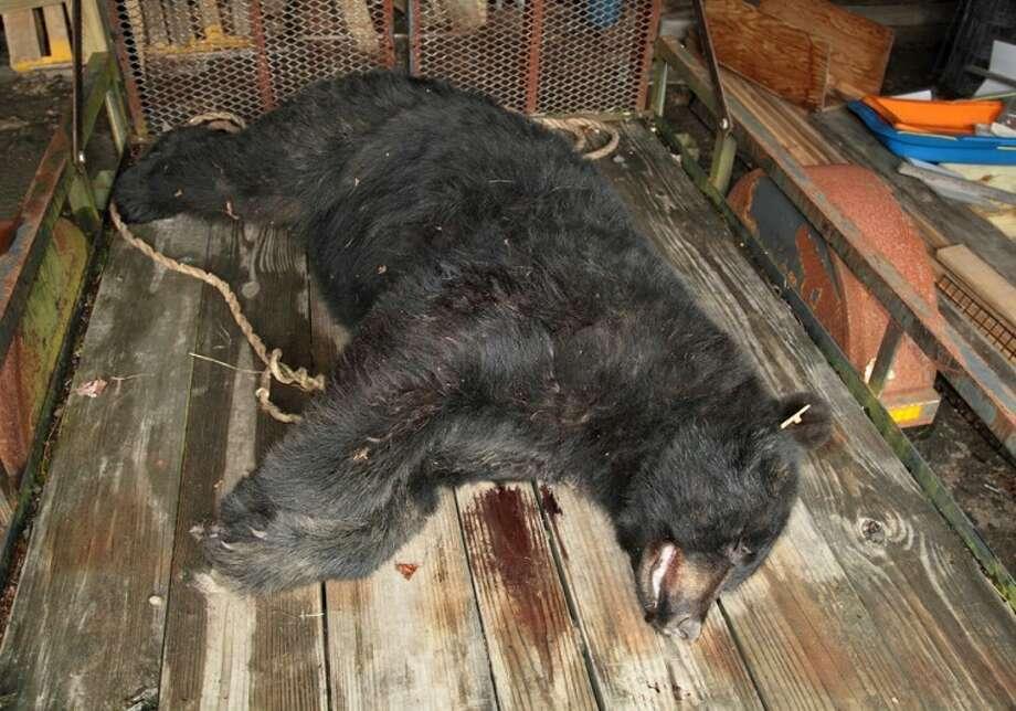 Burlington bear