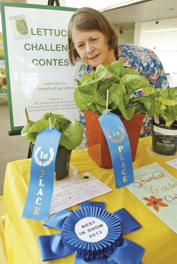 "Lettuce Challenge judge Beazie Larned looks over Best in Show entries by Hannah Rose Schagel of Davenport Ridge Middle School and Jeffrey Polonia of Rogers International School and a hydroponic entry, center, from the Domus Trafigura Work and Learn program during the 2nd annual ""Lettuce Challenge Contest"" award event at the Government Center Thursday which was sponsored by the Stamford Garden Club.Hour photo / Erik Trautmann"