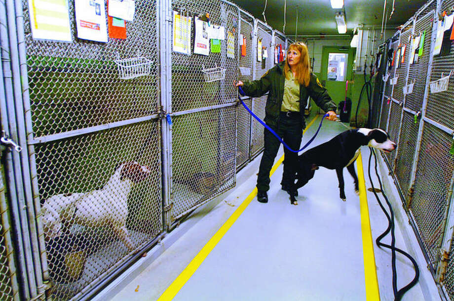 Stamford Animal Shelter Director Laurie Hollywood with some of the animals held at the overcrowded Magee St location. The Stamford animal shelter is asking for the Planning board to add $1.5 million in their budget for a new facility.
