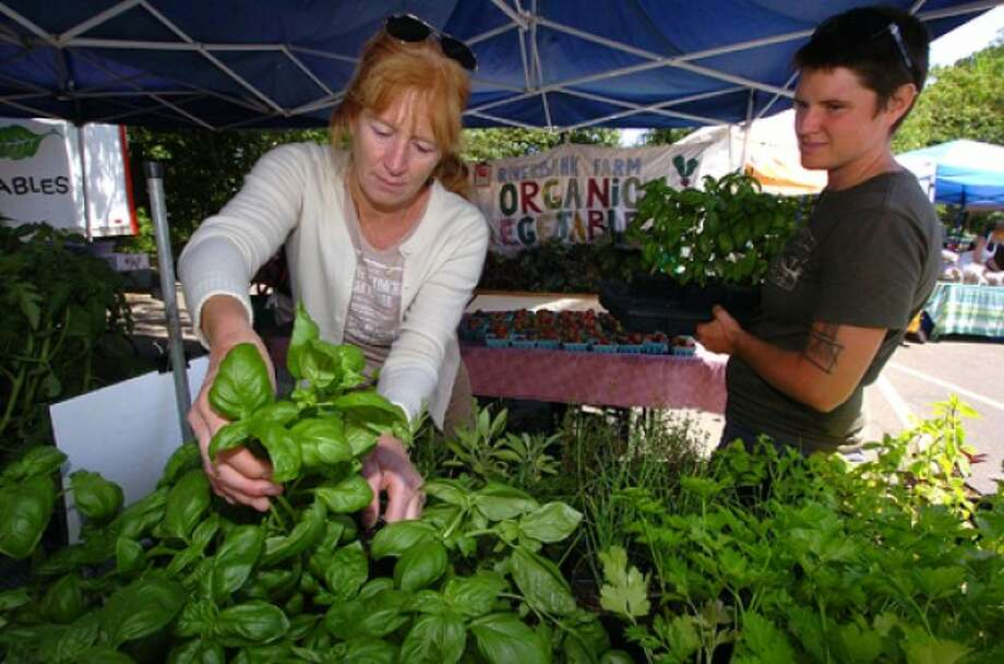 Photo by Alex von Kleydorff. Westons Martha Fagan picks some fresh Basil to make Pesto with the help of Mary Bohan from Riverbank Organic farm in Roxbury Ct, at The Westport Farmers market