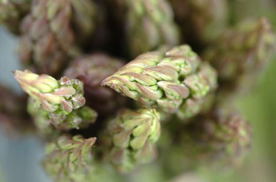 Photo by Alex von Kleydorff. Asparagus at The Westport Farmers Market.