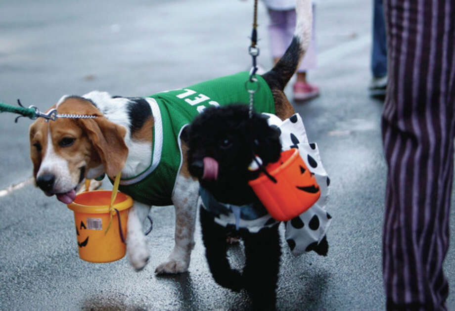 "Owners walk their dogs with pumpkin pail hanging on their necks as they make the rounds of homes in the annual ""Trick or Treat"" tradition on Halloween Monday, Oct. 31, 2011 at a subdivision at the financial district of Makati city east of Manila, Philippines. (AP Photo/Bullit Marquez) / AP"