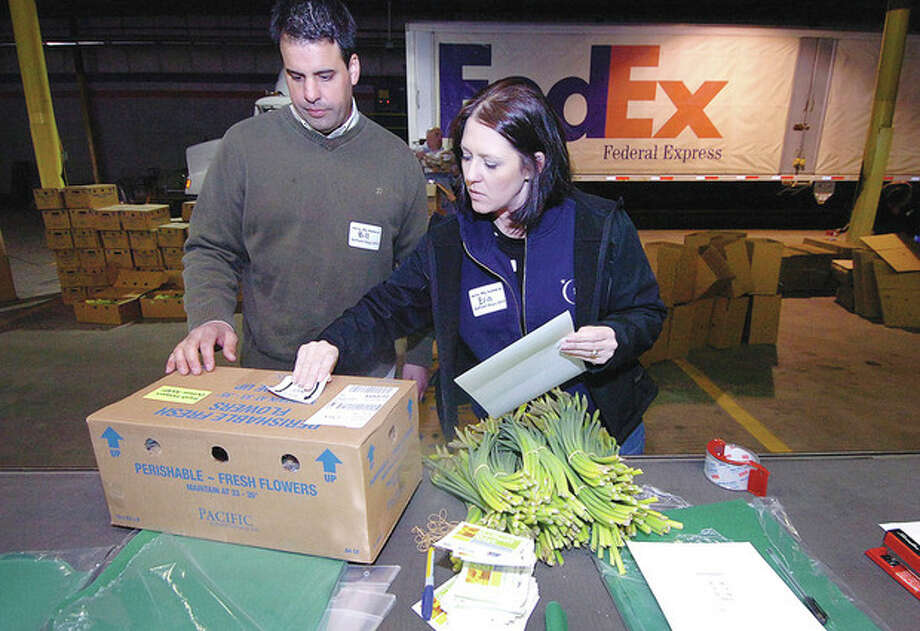 Hour Photo/Alex von KleydorffAbove, at the Fed Ex complex in Norwalk, Bill and Erin Nielsen finish a box of Daffodils and Teddy Bears with a label to a donor for the American Cancer Society's Daffodil days. At bottom, volunteer Ed Lamphier grabs a few dozen daffodils to pack for the American Cancer Society daffodil days. / 2013 The Hour Newspapers
