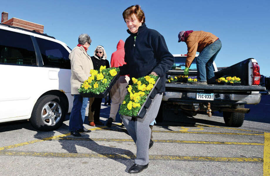 The Stamford Downtown Streetscape Volunteers, including Marion Glowka, mark the onset of spring with the planting of thousands of pansies in planters and gardens through out the downtown Wednesday morning in conjunction with theStamford Downtown Special District. This year, the group will plant 1,680 yellow pansies in Stamford Downtown.Hour photo / Erik Trautmann / (C)2013, The Hour Newspapers, all rights reserved