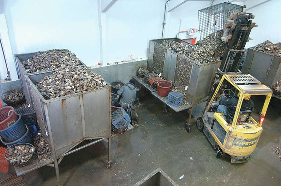 Fresh oysters arrive at Norm Bloom and Son in Norwalk on Tuesday. / 2013 The Hour Newspapers
