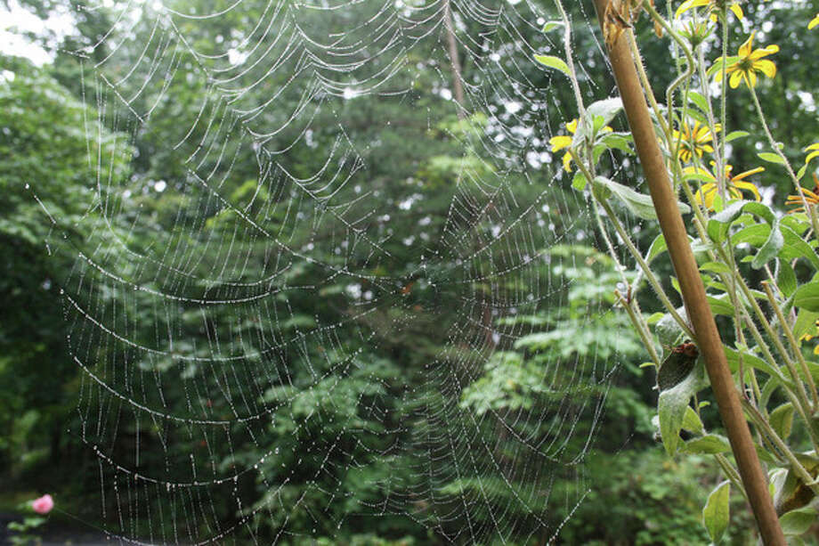 This Aug. 22, 2007 photo shows a spider's web in a residential garden in New Market, Va. Spiders may land on the creepy, crawly list for many people but they account for as much as 80 percent of all the predator control in home gardens. The payback is minimal -- food, water, shelter and easing off on harmful lawn and garden chemicals. (AP Photo/Dean Fosdick) / AP