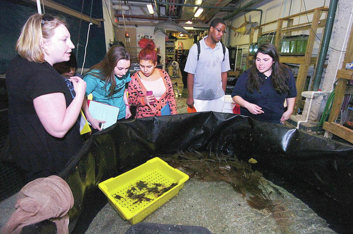 Hour photo / Alex von Kleydorff Teacher Caitlin Engle, students Rachel Carriera, Nicole Corral and Evan Adams check out a behind the scenes view of The Maritime Aquarium with Maxine Montello Maritime aquarist.