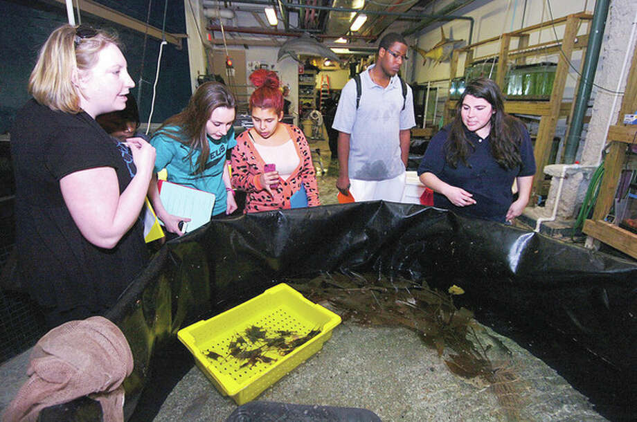 Hour photo / Alex von KleydorffTeacher Caitlin Engle, students Rachel Carriera, Nicole Corral and Evan Adams check out a behind the scenes view of The Maritime Aquarium with Maxine Montello Maritime aquarist. / 2013 The Hour Newspapers
