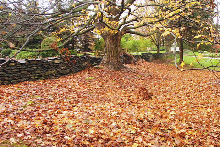Photo by Erik Trautmann Falling leaves along Drum Hill In Wilton. / (C)2011, The Hour Newspapers, all rights reserved