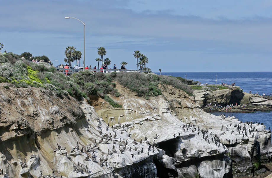 Tourists walk along the top of the cliffs above the massive bird gathering on the cove in the La Jolla section of San Diego, Tuesday, April 2, 2013. The birds have turned the cliffs white with their droppings and caused a stench in the area that draws tourist to restaurants and hotels. (APPhoto/Lenny Ignelzi) / AP