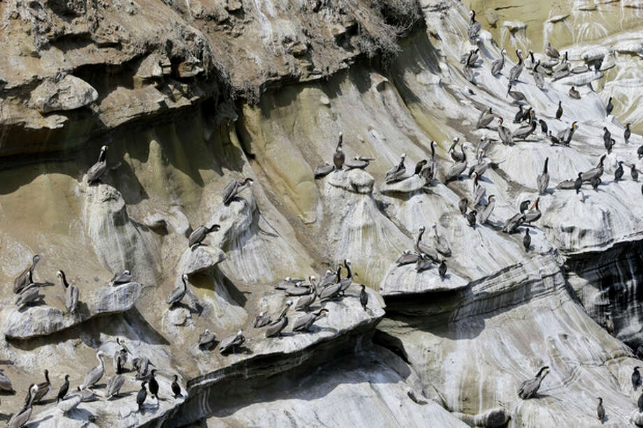 The pelicans and cormorants appear to have painted a mosaic on the cliffs above the cove in the La Jolla section of San Diego, Tuesday, April 2, 2013. The mosaic is actually from the droppings of the birds which have turned the cliffs white and caused a stench in the tourist center featuring restaurants and hotels. (APPhoto/Lenny Ignelzi) / AP