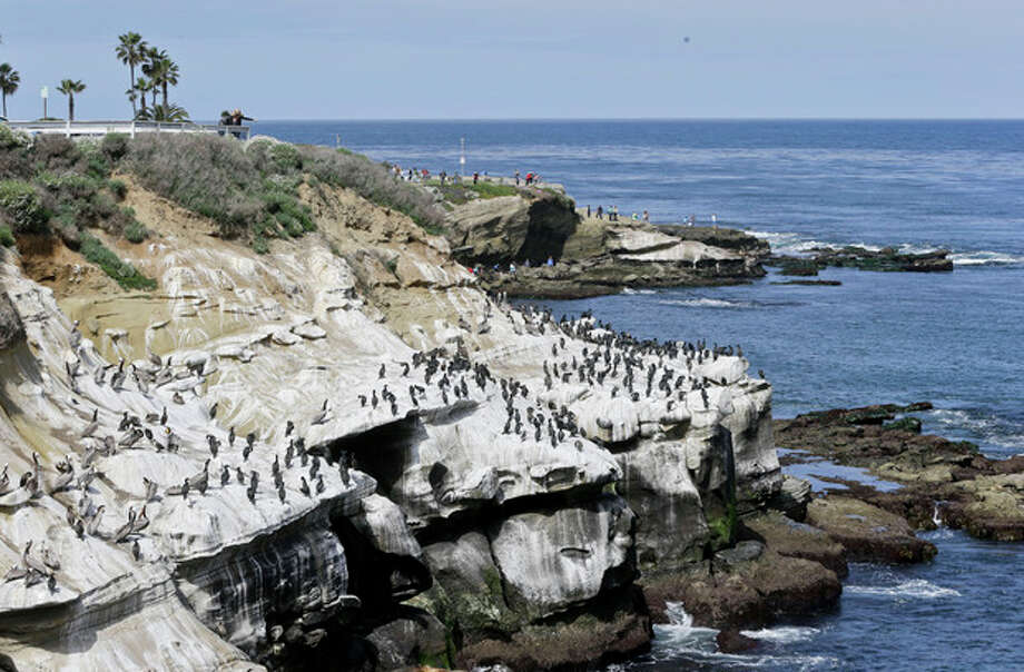Tourist watch the massive bird gathering on the cliffs in the La Jolla section of San Diego, Tuesday, April 2, 2013. The birds have turned the cliffs white with their droppings and caused a stench in the area that draws tourist to restaurants and hotels. (APPhoto/Lenny Ignelzi) / AP
