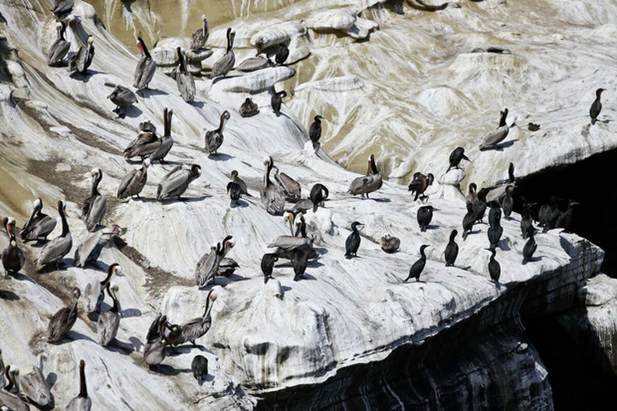 The pelicans and cormorants appear to have painted a mosaic on the cliffs above the cove in the La Jolla section of San Diego, Tuesday, April 2, 2013. The mosaic is actually from the droppings of the birds which have turned the cliffs white and caused a stench in the tourist center featuring restaurants and hotels. (APPhoto/Lenny Ignelzi)