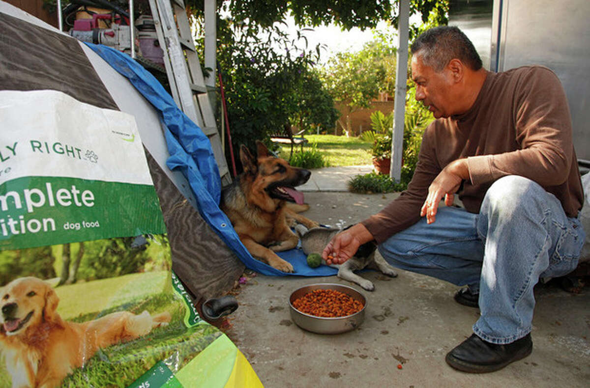 In this Wednesday, Nov. 16, 2011 photo, Luis Calderon offers dog food to his German shepherd, Buddy, in El Monte, Calif. Calderon, a self-employed handyman, has a wife and two kids and says work is scarce. If Buddy needed a vet, Calderon says he would have to go through public services or use credit. (AP Photo/Damian Dovarganes)