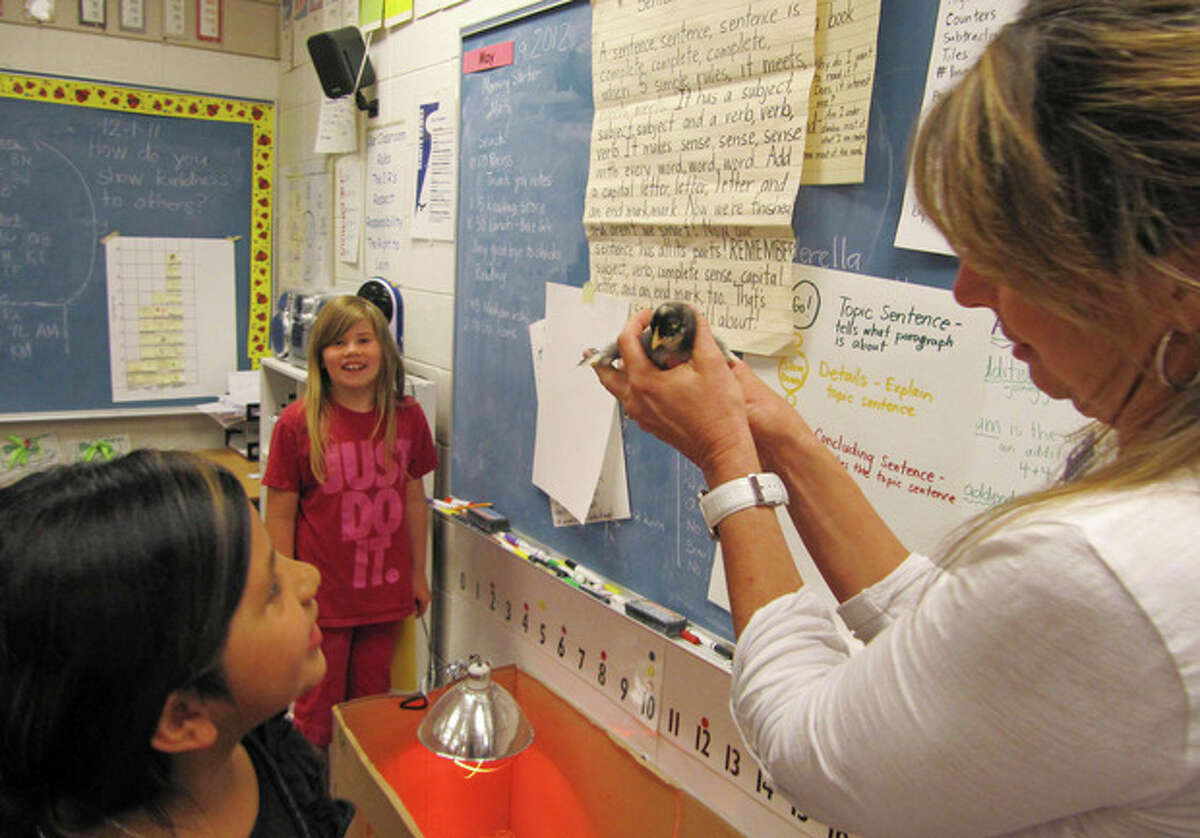 In this photo taken May 9, 2012, Middleton Heights Elementary Principal Robin Gilbert holds a baby chick while visiting an all-girls classroom of first- and second-graders at her school in Middleton, Idaho. Middleton is believed to be the only public school in Idaho offering all-boy and all-girl classrooms, though the movement is widespread in other states and is now being targeted by the American Civil Liberties Union in a bitter struggle over whether single-gender learning should be continued. (AP Photo/Jessie L. Bonner)