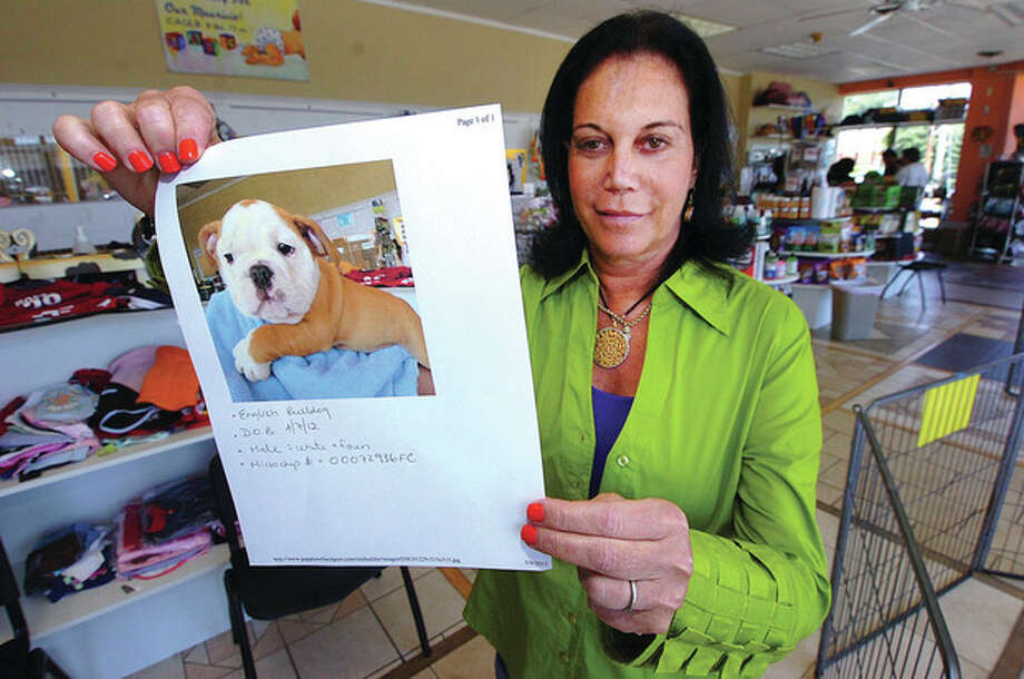 Hour Photo/ Alex von Kleydorff. Puppies of Westport co owner Lauren Maren Kaufman holds a photo of an English Bulldog that was stolen from their Westport Ave. store on Monday morning / 2012 The Hour Newspapers