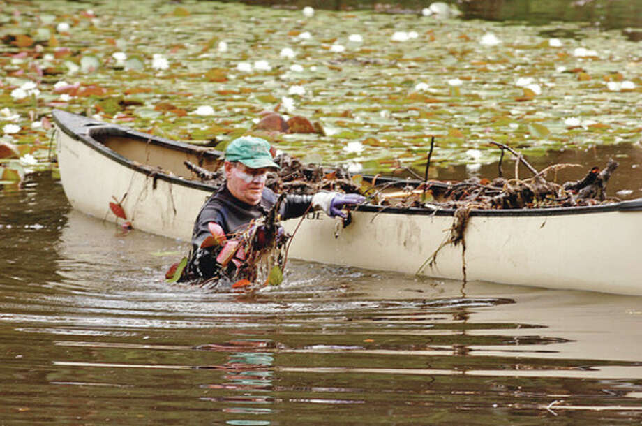 Volunteers including Jeff Lavaty clear lily pads out of Horseshoe Pond by hand as part of Operation Lily Pad organized by Wiklton resident Anne Deware Saturday.Hour photo / Erik Trautmann / (C)2012, The Hour Newspapers, all rights reserved
