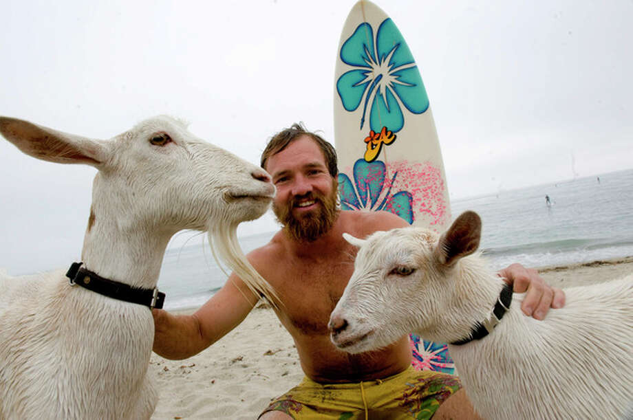 Goat herder Dana McGregor, of Pismo Beach, Calif., surfs with his goats Pismo, left, and Pismo's mother Goatee, at San Onofre State Beach, Calif., on Wednesday July 11, 2012.McGregor started taking Pismo's mother Goatee to the beach, and it wasn't long before she was on a surfboard. When Pismo was born, McGregor put her on a board too, and she was a natural, he says. (AP Photo/The Orange County Register, Ron Veal) MAGS OUT; LOS ANGELES TIMES OUT;TV OUT: MANDATORY CREDIT / The Orange County Register
