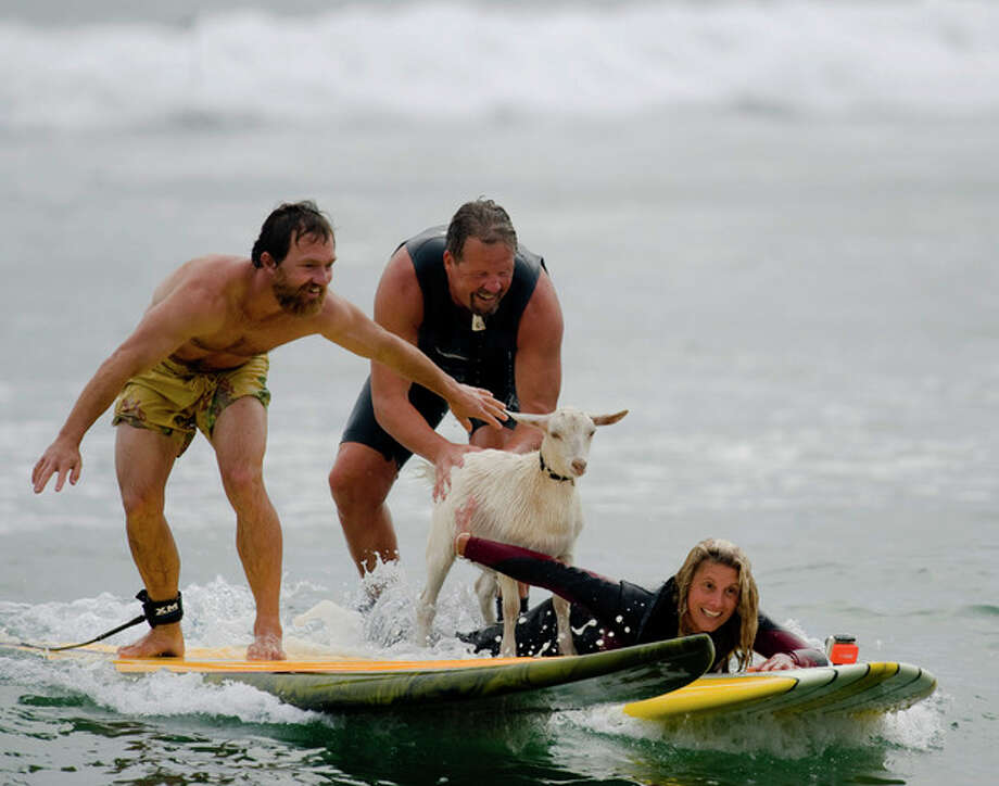 Dana McGregor, from Pismo Beach, far left, surfs with his pet goat Pismo and pals Mark and Debbie Gale, of San Clemente in San Clemente, Calif., on Wednesday July 11, 2012. McGregor started taking Pismo's mother Goatee to the beach, and it wasn't long before she was on a surfboard. When Pismo was born, McGregor put her on a board too, and she was a natural, he says. (AP Photo/The Orange County Register, Ron Veal) MAGS OUT; LOS ANGELES TIMES OUT;TV OUT: MANDATORY CREDIT / THE ORANGE COUNTY REGISTER