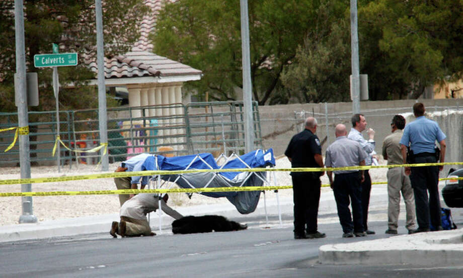Metro officers and officials investigate the scene where an escaped male chimpanzee was shot and killed by a Metro officer, seen below the blue tent, on Ann Road just east of Jones Boulevard in North Las Vegas on Thursday, July 12, 2012. The chimpanzee, along with another female chimpanzee, escaped from a private residence near the scene. Metro police subdued and captured the female and shot and killed the male. (AP Photo/Las Vegas Review-Journal, Jessica Ebelhar) LOCAL TV OUT; LOCAL INTERNET OUT; LAS VEGAS SUN OUT / LVRJ©2012