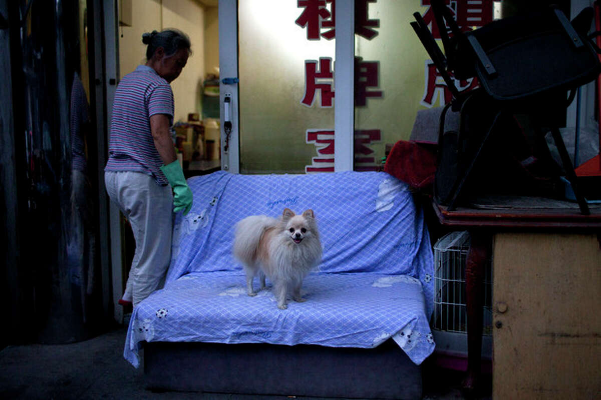 In this Sunday, July 8, 2012 photo, a pet dog stands on sofa while the owner enters a mahjong room in a hutong, an old alleyway, near the Houhai lake in Beijing, China. To see a side of Beijing other than glitzy shopping malls or imposing, Soviet-style government buildings, take an afternoon to explore the city's ancient narrow alleyways, known as hutongs. (AP Photo/Alexander F. Yuan)