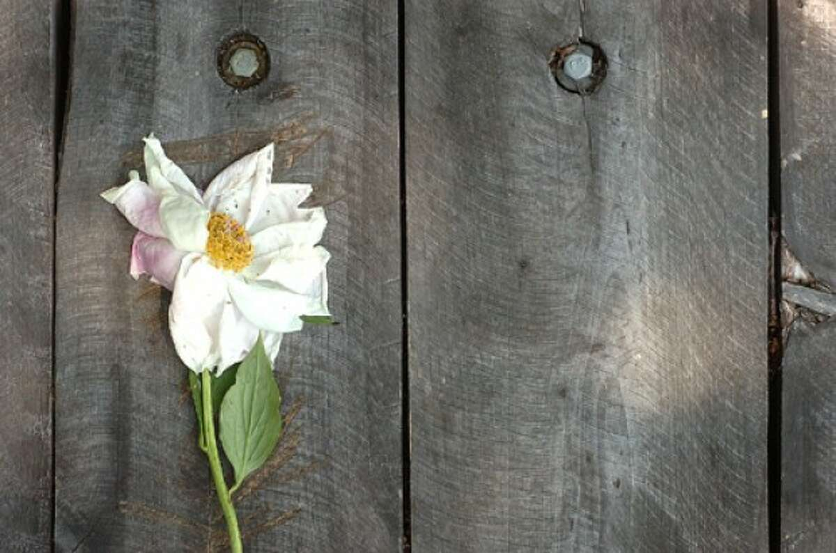 Photo by Alex von Kleydorff. A Flower, placed on the hand made wooden table at the top of Quarry Head.