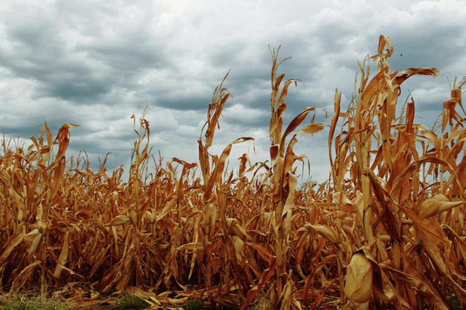 Dry corn is pictured in a field as rain clouds threaten near Paoli, Okla., Thursday, July 26, 2012. A brief respite from the drought was expected with rain chances of 50 to 60 percent across Oklahoma through sunrise Friday. (AP Photo/Sue Ogrocki) / AP