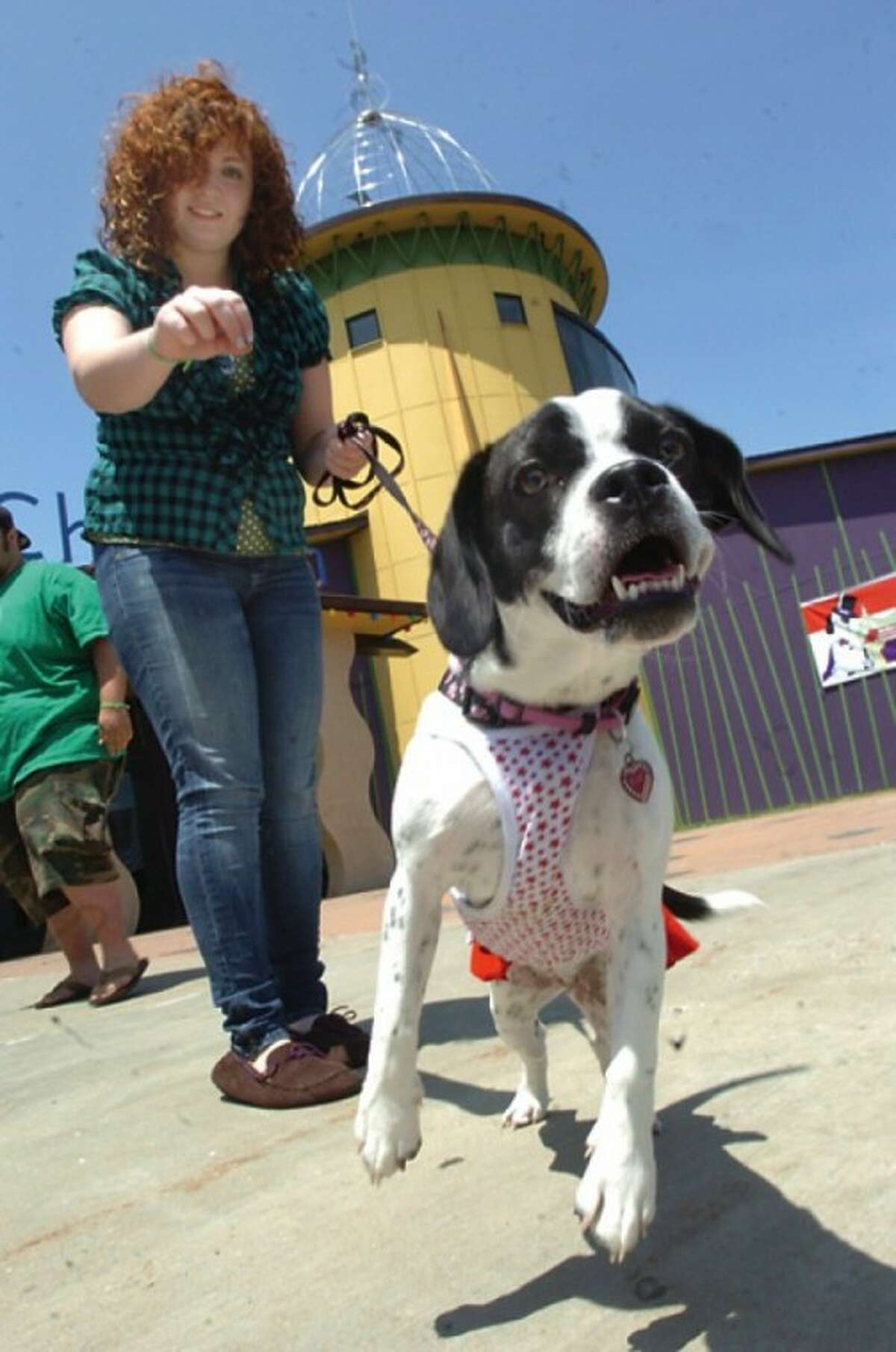 Lauren Wolfe with her frengle named Ellie at the BooZoo''s Canine Carnival Sunday at the Stepping Stones Museum for Children. hour photo/matthew vinci