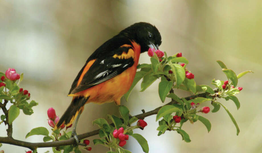 Unexpected visitors are found at nectar feeder