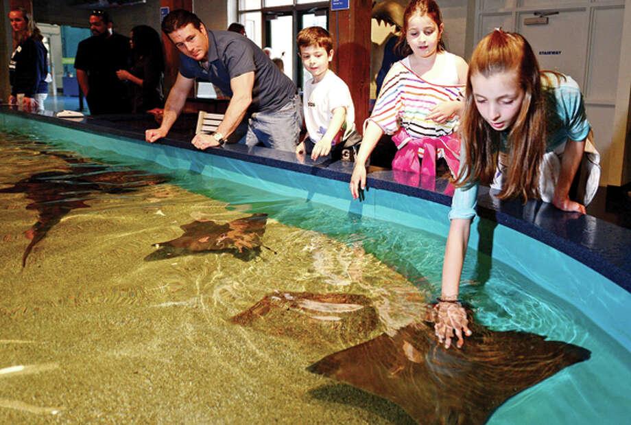 David Marcino and his children, Dean, Lia and Maris, enjoy the touch tank at the Maritime Aquarium Thursday. The Maritime Aquarium received accreditaion from The Association of Zoos & Aquariums (AZA). Hour photo / Erik Trautmann / AP