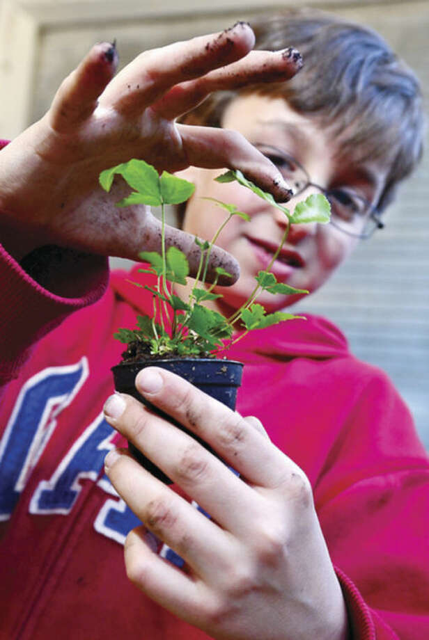 Joseph Yerinides, 9, picks out a plant for a Glass Jar Terrarium he built as part of the Earth Day Celebration at SoNo Marketplace Sunday.Hour photo / Erik Trautmann