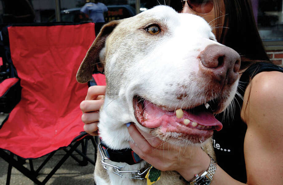 Rocksis is among the pit bulls up for adoption Sunday.