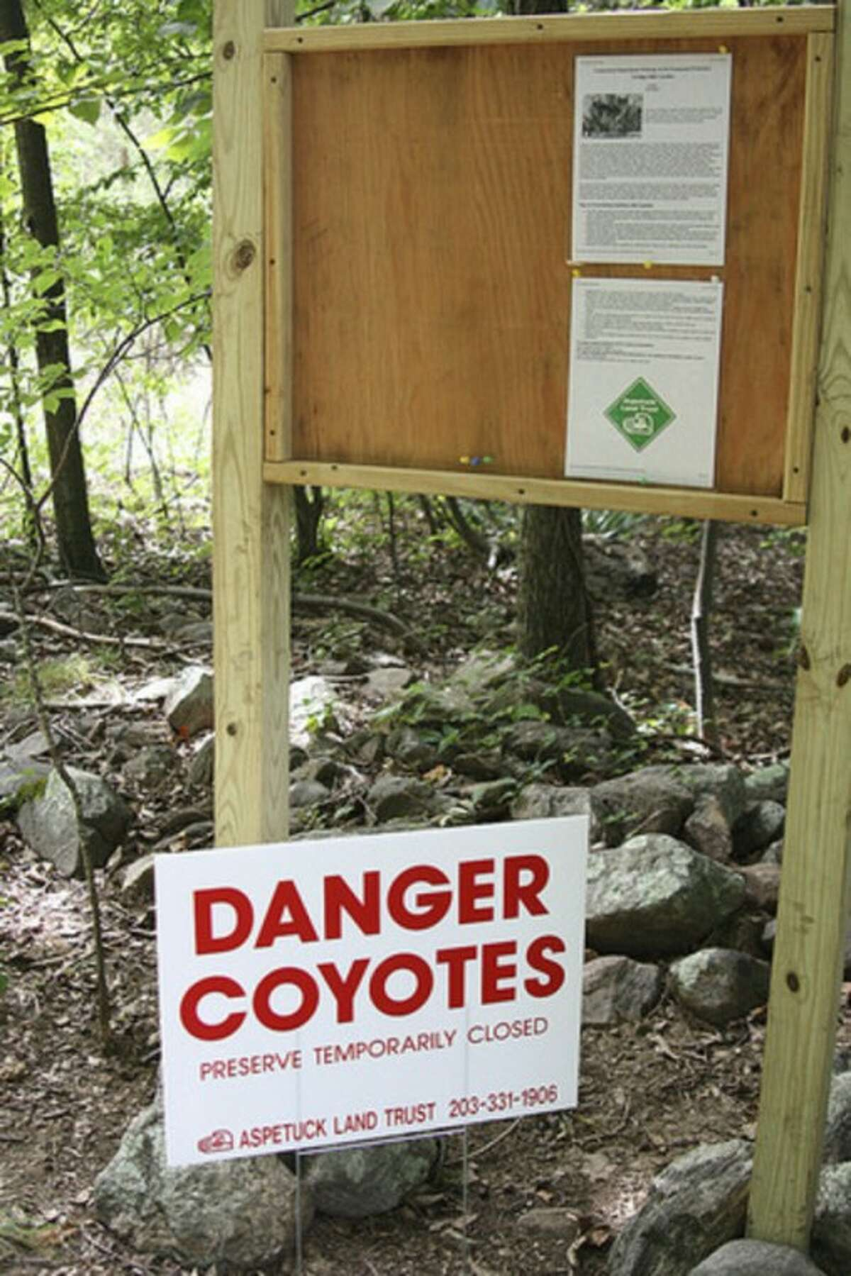 A sign warns of coyotes at the Taylor Woods/Tall Pines preserve in Weston. Photo by Chris Bosak