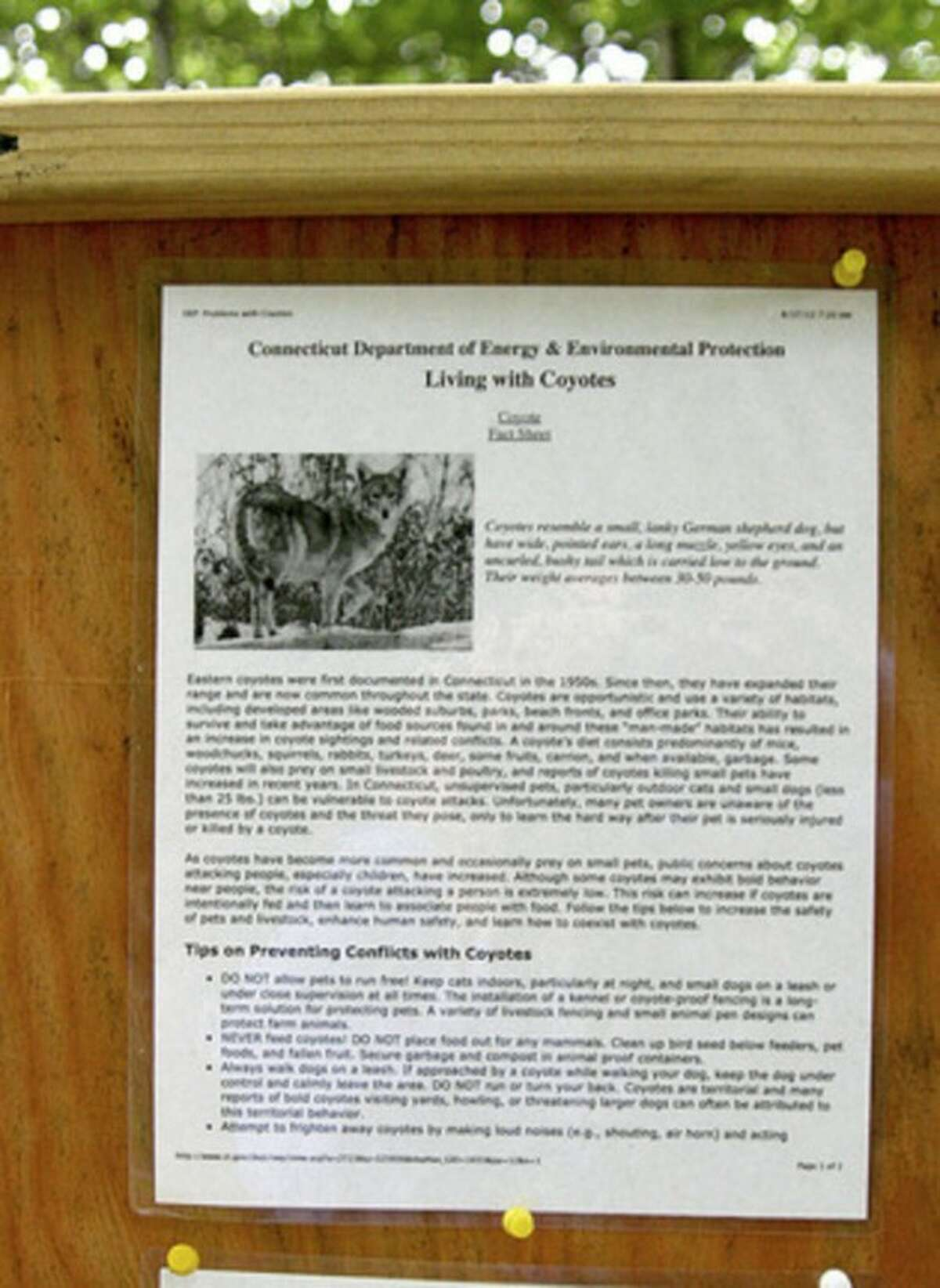 Information about coyotes is posted at the Taylor Woods/Tall Pines preserve in Weston. Photo by Chris Bosak